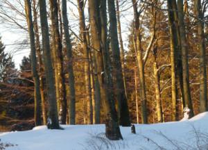 vinterbild-ullasjobacken